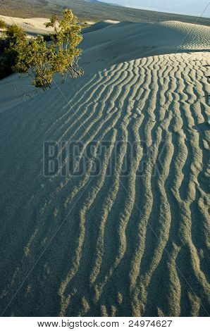 Sand dune shadow