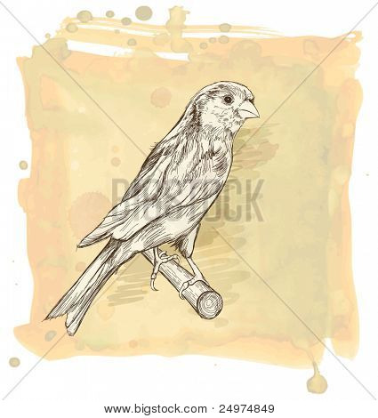 Esboço de um pássaro canário sentado sobre um ramo & aquarela fundo vintage. Bitmap copiar meu vetor eu