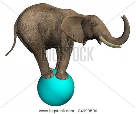 Intelligente Elefant (isolated on White)