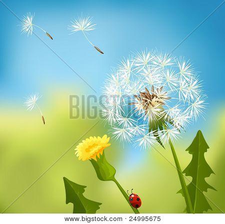Dandelions at spring
