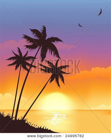 Sunset with palmtrees