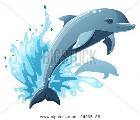 Two dolphins in water splash