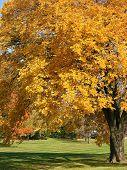 Old Autumn Tree 1