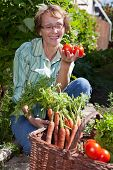 picture of senior-citizen  - Senior woman in garden picking fresh produce - JPG