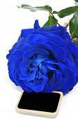 a blue rose with a blank blackboard label on a white background