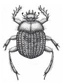 Sacred Beetle Of Scarabs Tattoo Art. Dot Work Tattoo. Insect. Egyptian Symbol Of Eternal Life, Resur poster