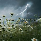 foto of shock awe  - Lightning strike over daisy field - JPG