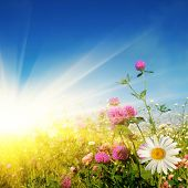 pic of yellow flower  - Flower field on sunny day - JPG