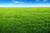 stock photo of blue sky  - Green field and blue sky - JPG