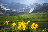 Beautiful View On Green Meadow With Yellow Flowers On Foreground Next To Mountain On Sunny Clear Sum poster