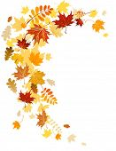 stock photo of mountain-ash  - Autumn leaves  swirl with space for text - JPG