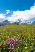 Idyllic Mountain Landscape In The Summertime In The Swiss Alps poster