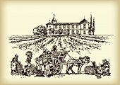Vintners are harvesting grape in the vineyard, vector hand drawn illustration