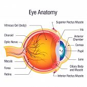Eye Anatomy Info Concept Background. Cartoon Illustration Of Eye Anatomy Info Vector Concept Backgro poster