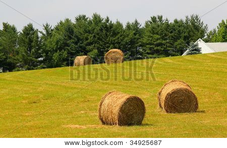 four bales of hay