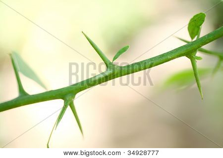 Plant Thorns