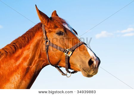 horse with the blue sky background