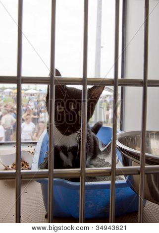 RIDGEFIELD PK, NJ-JULY 14: A kitten for adoption inside the air conditioned viewing trailer from North Shore Animal League at the 2nd Annual Bark In The Park on July 14, 2012 in Ridgefield Park, NJ.