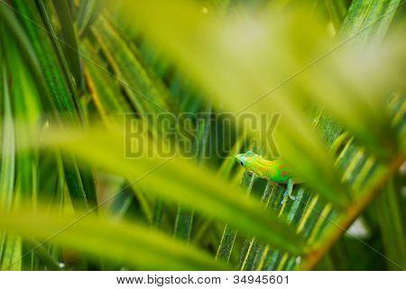 Exotic Green Tropical Lizard Hiding in Lush Fern
