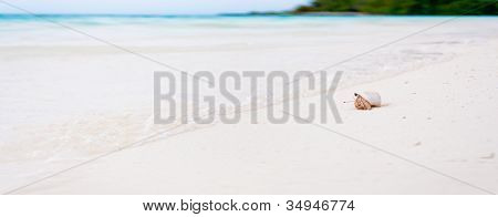 Hermit Crab On The Beautifull Beach Of The Tropical Maldives Looking At The Watter
