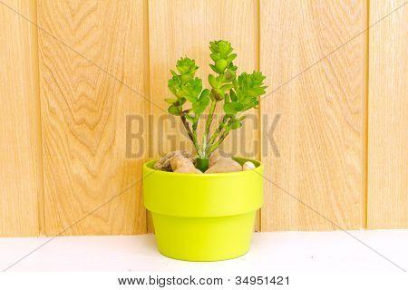 Coleção de Daisy árvore em vaso verde.