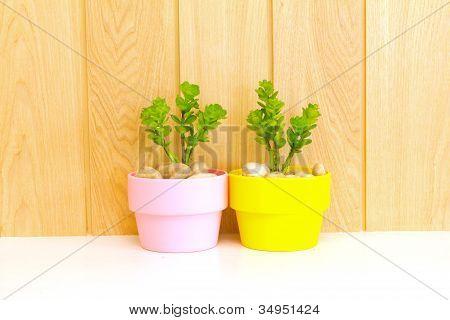 Coleção de Daisy árvore em vaso-de-rosa e amarelo Flowerpot...