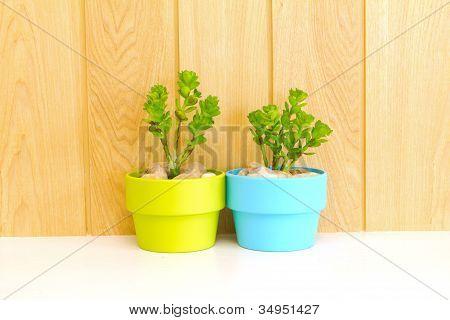 Coleção de Daisy árvore em vaso verde e vaso azul.
