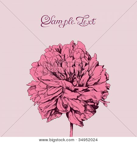 Beautiful, pink flower, greeting card.