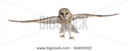 Barn Owl, Tyto alba, 4 months old, portrait flying against white background