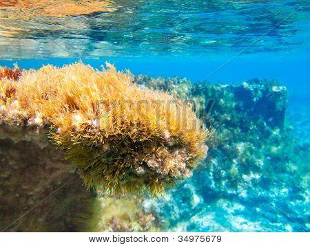Ibiza Formentera Unterwasser Anemone seelandschaft in Golden und Türkis