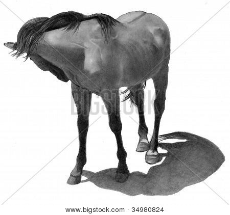 Pencil Drawing of Horse Looking Back
