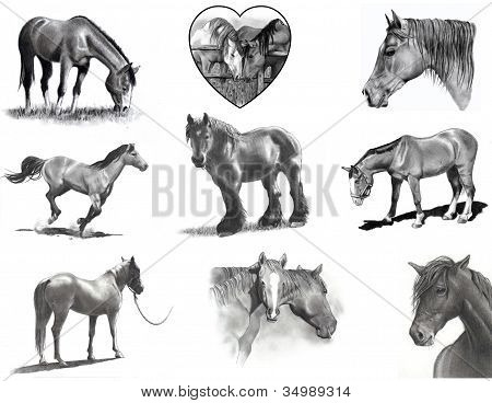 Collage of Horses in Pencil