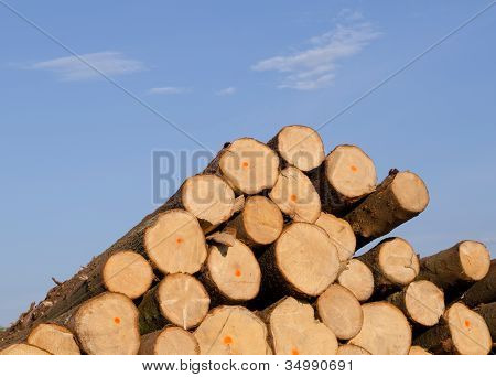Cut Spruce Fir Tree Logs On Background Of Blue Sky