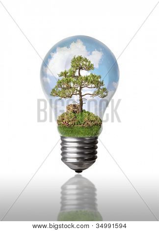 Tree in a light bulb with clouds on white with clipping path