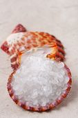 pic of sea salt  - white rock sea salt in sea shell on paper and second shell background shallow DOF - JPG