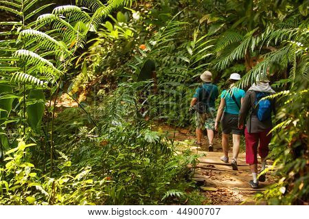 Group Of Trekkers Hike Through Green Jungle In Sri Lanka