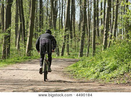 Green Forest Biker