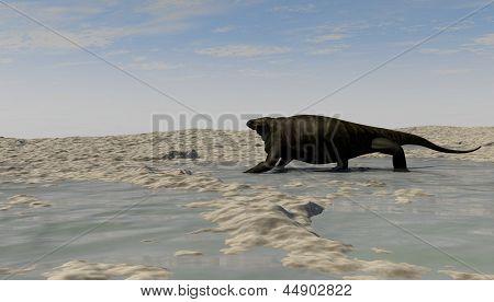 cotylorhynchus on shore