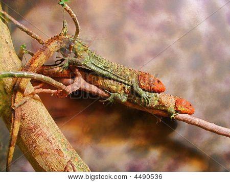 Twin Lizards