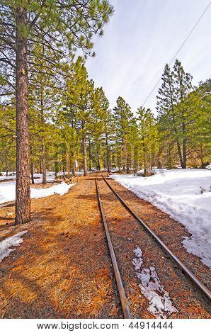 Rail Siding Into The Snow And Trees
