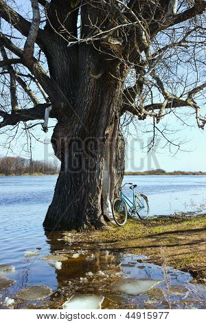 Flooded With Water Tree As A Result Of Flooding