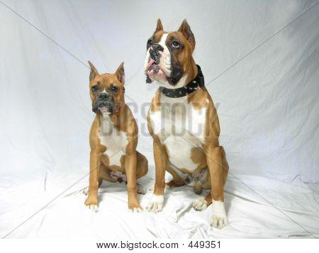 Pair Of Boxers