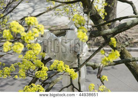Pollution Plastic In Maple Tree