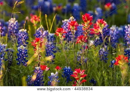 Spring Wildflowers In Texas