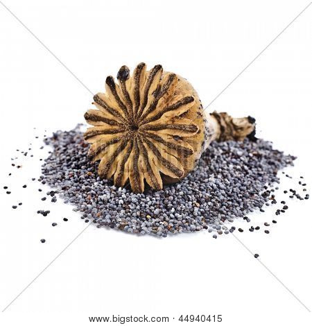 poppy seeds and poppy head top view isolated on white background