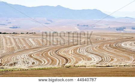 Painted Field