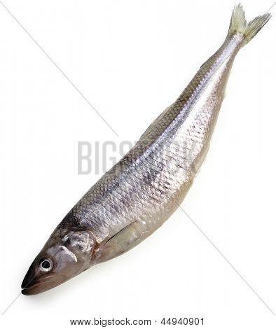 fresh smelt fish isolated on white background