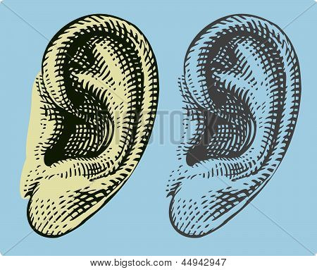 Human ear in engraving style