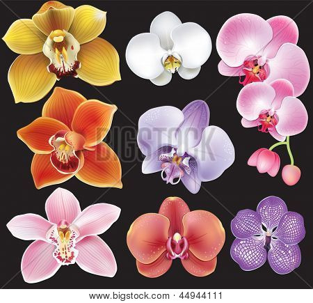 Collection of orchid flower
