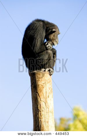 Lonely Monkey Sitting On Top Of A Large Pole